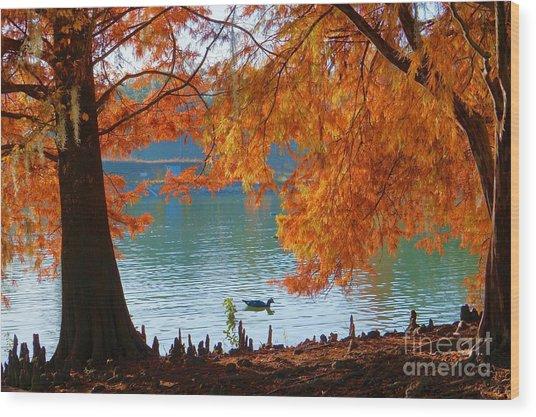 Lake Ella Morning Wood Print