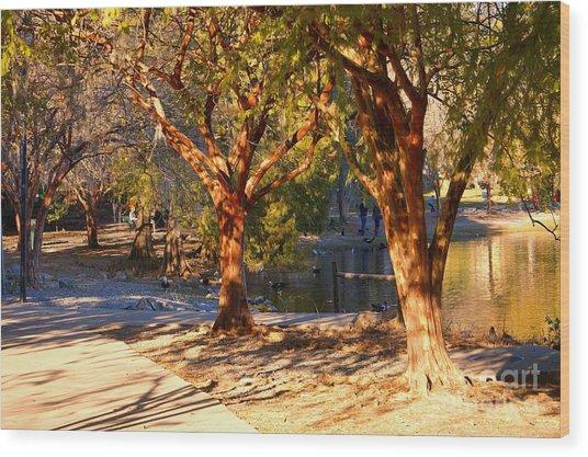 Lake Ella Trail Wood Print
