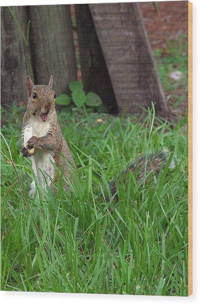 Lake Howard Squirrel 000 Wood Print by Chris Mercer