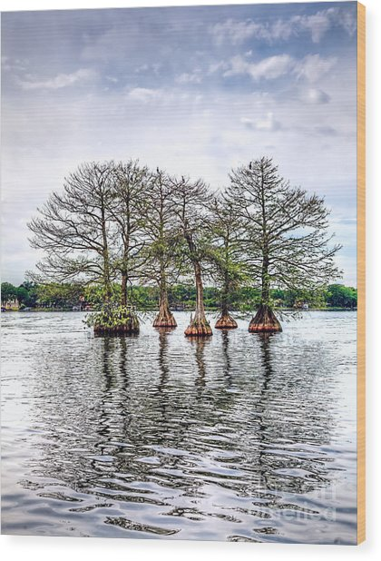 Lake Maitland Cypress Wood Print by Anthony Festa