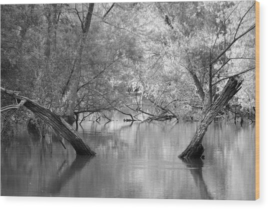Lake Reflections Wood Print by Misty Stach