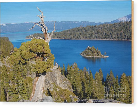 Lake Tahoe Reaching Tree Wood Print