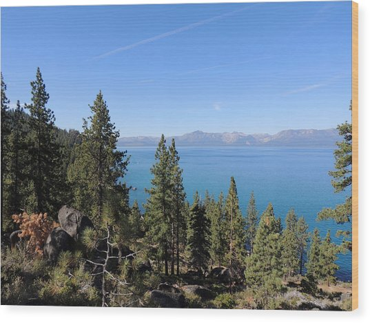 Lake Tahoe Through The Trees Wood Print