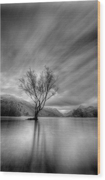Lake Tree Mon Wood Print