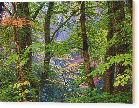 Land Of The Noonday Sun Wood Print