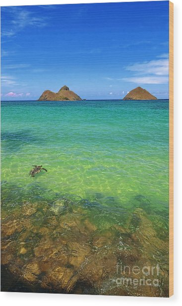 Lanikai Beach Sea Turtle Wood Print