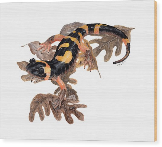 Large Blotched Salamander On Oak Leaves Wood Print