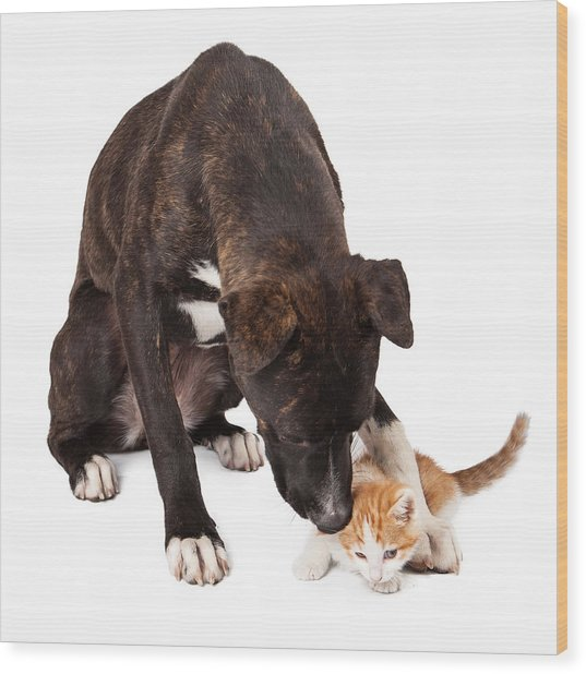 Large Dog Playing With Kitten Wood Print