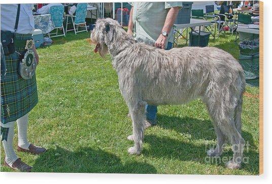 Large Irish Wolfhound Dog  Wood Print