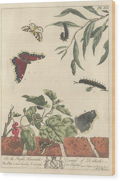 Large Magpie Moth Wood Print