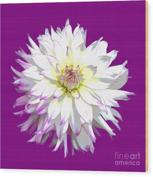 Large White Dahlia On Purple Background. Wood Print by Rosemary Calvert