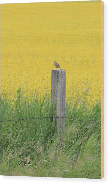 Lark And Canola Wood Print by Susan Copley