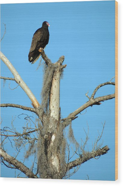 Larry Buzzard Vulture Wood Print