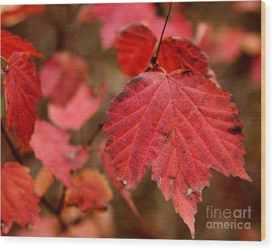 Last Fall Colors Wood Print