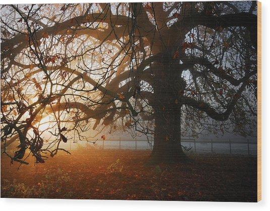 last of the Autumn wine Wood Print