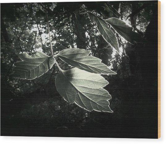Last Rays II Wood Print