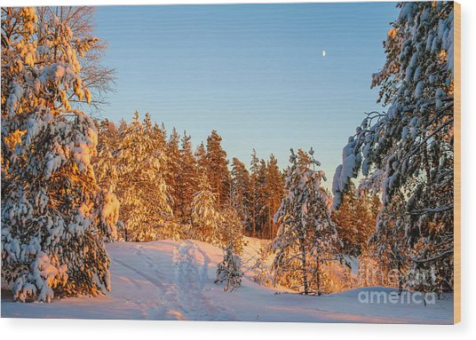 Last Rays Of Light In The Winter Forest Wood Print