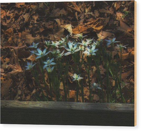 Last Year's Leaves Wood Print