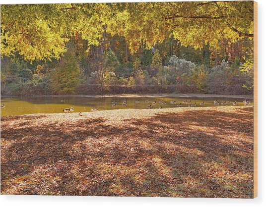Late Afternoon Autumn Sunshine At The Lake Wood Print