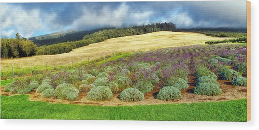 Lavendar 5 Wood Print
