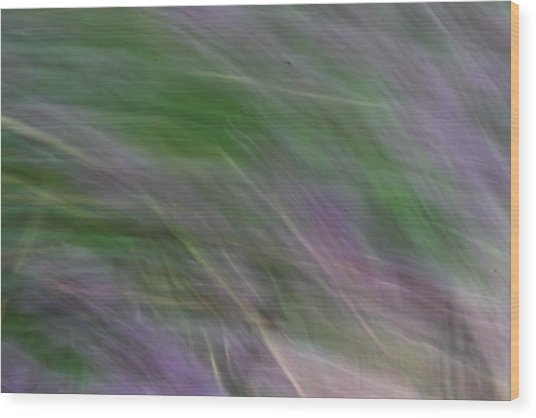 Lavendar Fields Wood Print