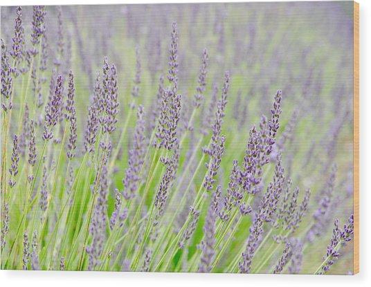 Lavender 1 Wood Print by Rob Huntley