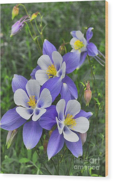 Wood Print featuring the digital art Lavender And White Star Flowers by Mae Wertz