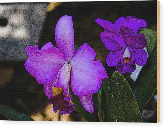 Lavender Catleya Orchid Wood Print