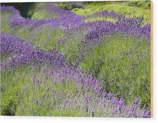 Lavender Day Wood Print