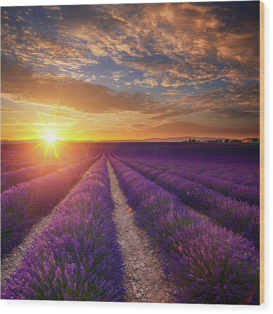 Lavender Field At Sunset Wood Print by Mammuth