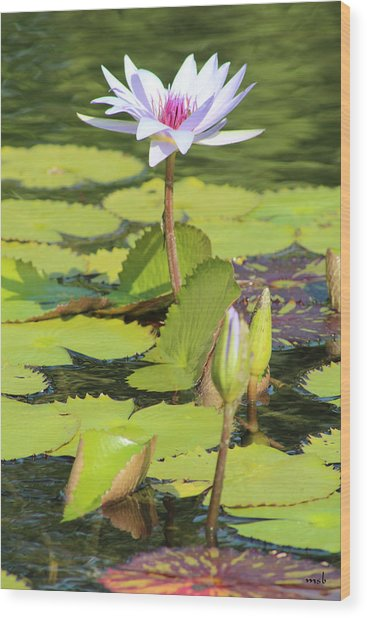 Lavender Flower On A Pond Wood Print by Mark Steven Burhart