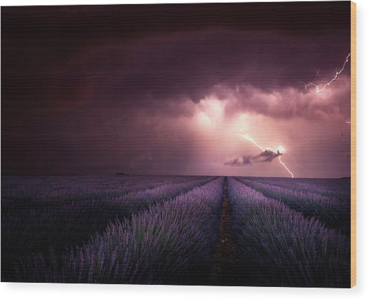 Lavender Fragrance Wood Print