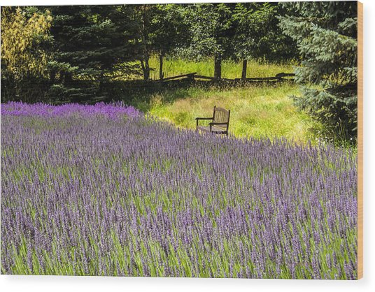 Lavender Rest Wood Print