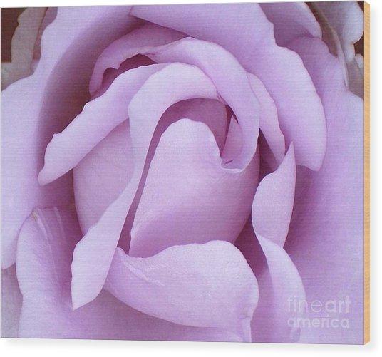 Lavender Rose Blossom 2 Wood Print