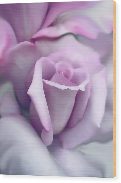 Lavender Rose Flower Portrait Wood Print