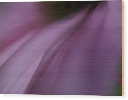 Lavender Slide 2 Wood Print