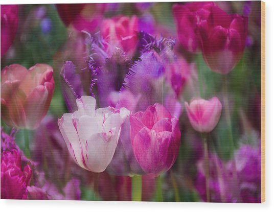 Layers Of Tulips Wood Print