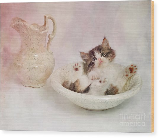 Lazy Bathing Cat Wood Print