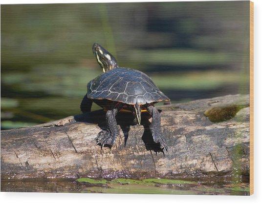 Lazy Day On A Log 6241 Wood Print