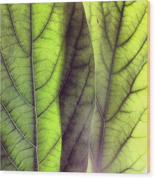 Leaf Abstract Wood Print