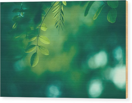 Leaf Background Wood Print by Jasmina007