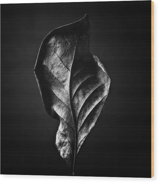 Black And White Nature Still Life Art Work Photography Wood Print