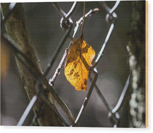 Leaf. Wood Print