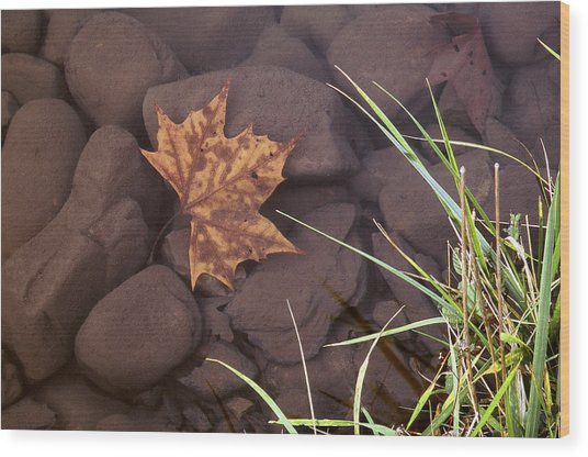 Leaf In The Mountain Fork River Wood Print
