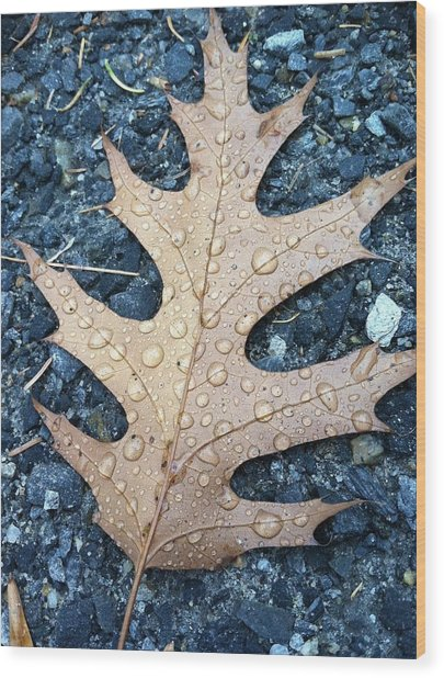 Leaf Wood Print by Michelle Simard
