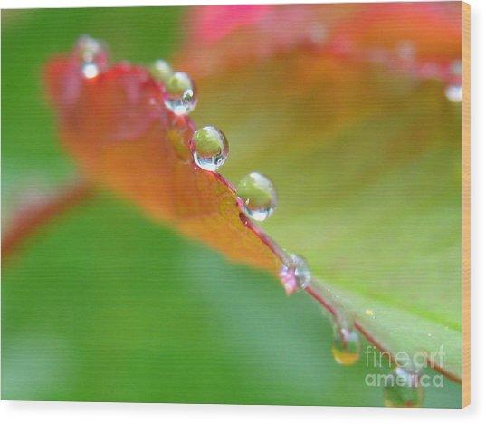 Leaf Pearls Wood Print