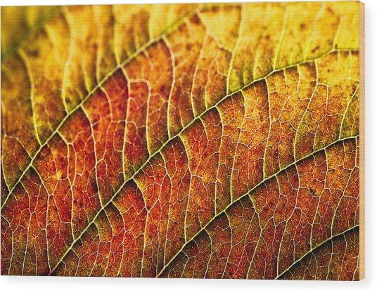 Leaf Rainbow Wood Print