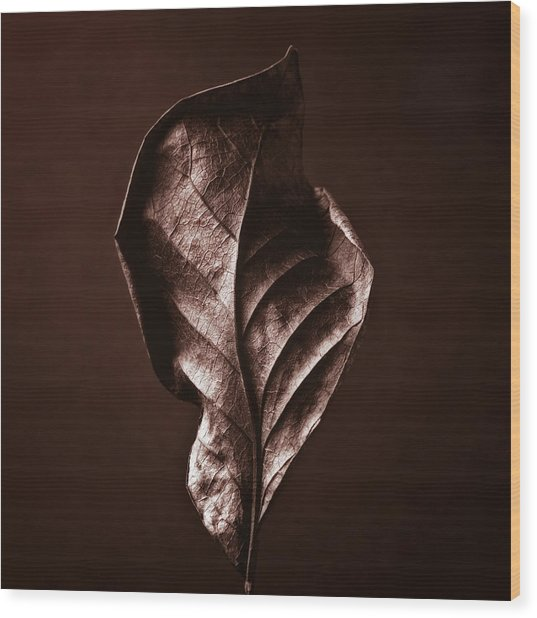 Copper Gold Red Brown Nature Still Life Art Work Photograph Wood Print