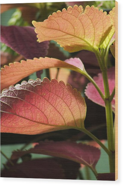 Leafy Plant Wood Print by Nelson Watkins