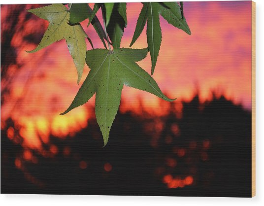 Leafy Sunset Wood Print by Sabre Tooth